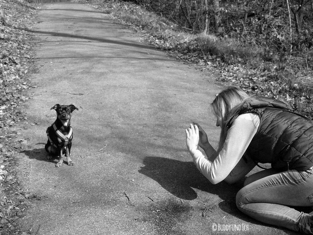 Hundeblog Buddy und Ich; Zwergpinscher Rüde