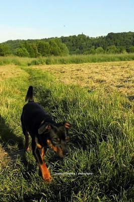 Abendsonne auf der Hundwiese Kettwig