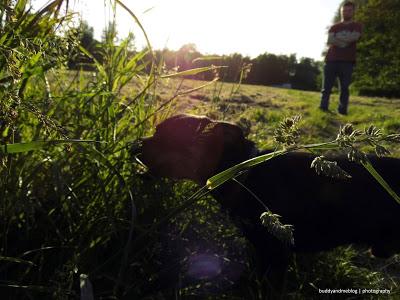 Abendsonne Hundewiese Kettwig