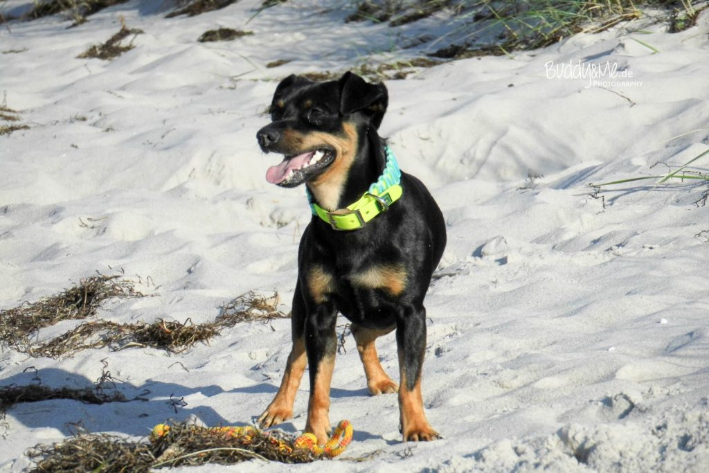 Buddy and Me | Hundeblog. Der Dogblog mit Pinscherperspektive.