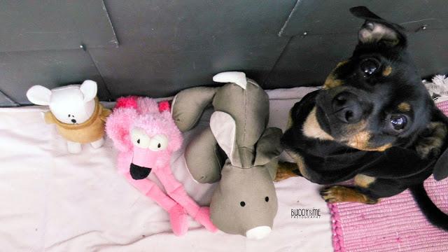 geburtstag, hund, flamingo, happy birthday, geschenke, dogblogger