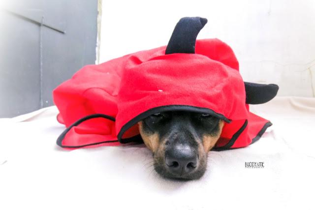 monatspfoto oktober, dunkelbunterhund, dogblogger