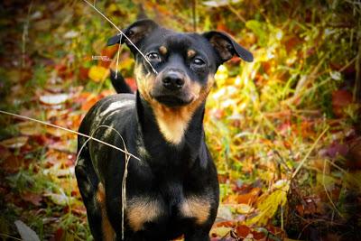 Herbst, Wald, Gassi, Hundespaziergang, Essen, Ruhrgebiet, Sonnenlicht, Herbstfarben