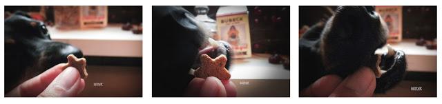 Bubeck, Hundefutter, Hundekuchen, Produkttest, Testbericht, Kekse, gesund, getreidefrei, Ernährung