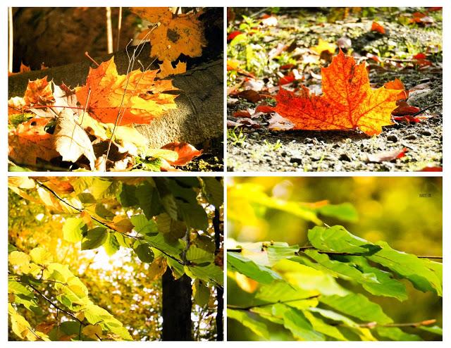 Herbst, Wald, Goldener Oktober, Essen Ruhr