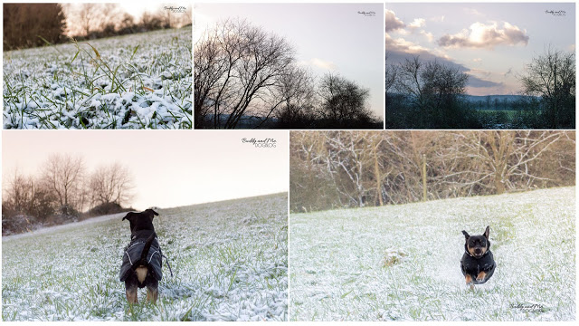 Pinscher Buddy, Zwergpinscher, Rüde, winterwonderland, hundeblog, ruhrgebiet, schnee, winter, essen schuir, winterzauber, Winterspaziergang mit Hund