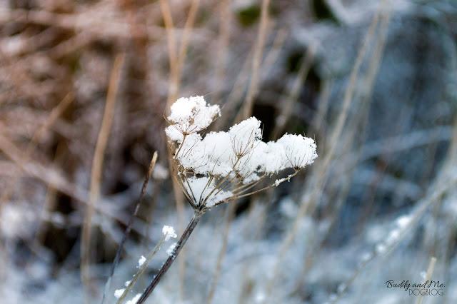 winterwonderland, hundeblog, ruhrgebiet, schnee, winter, essen schuir, winterzauber, Winterspaziergang mit Hund