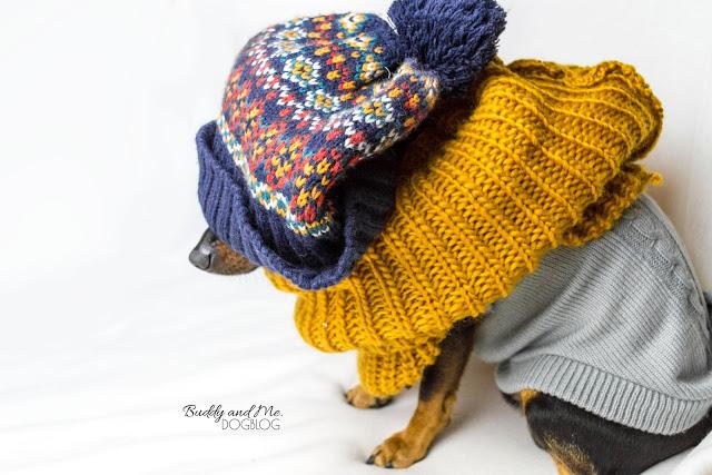 Pinscher Buddy, Zwergpinscher, Rüde, Hund, Hundefotografie, Nikon D3200, Nikkor 18-55mm f/3.5-5.6, Mütze, Schal, Pullover, Hundebekleidung, Hundemantel, Hundepullover, Winter, sinnvoll, frieren, Kurzhaar, keine Unterwolle