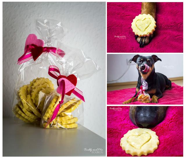 Jetsetdog, Valentina Cookies, Valentinstag, Hundekekse, Bio, Kokos, Maismehl, gesunde Snacks, frisch, Erfahrungen, Test, Pinscher Buddy, Zwergpinscher, Miniature Pinscher, Rüde
