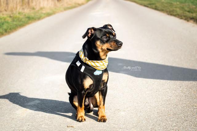 Pinscher Buddy, Zwergpinscher, Rüde, Miniature Pinscher, Blogdog, Hundefotografie, Nikon D3200, Nikkor 18-55mm, Essen, Schuir, Ruhrgebiet, Ruhrpott, Frühling, Winter, Natur, Sonne, Energie, Leben