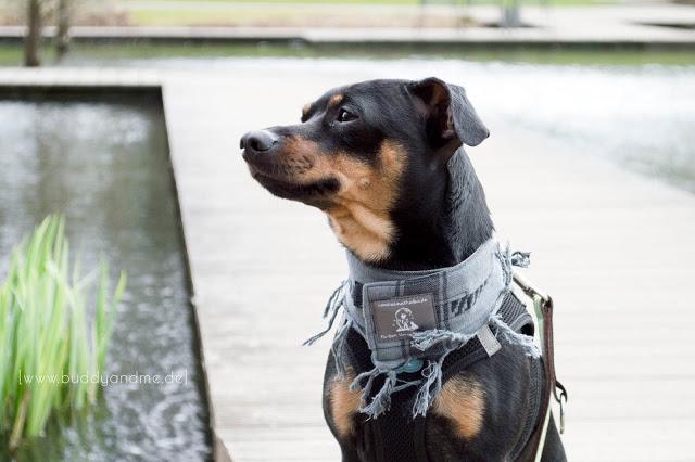 Pinscher Buddy, Zwergpinscher, Rüde, Hundeblog, Dogblog, Grugapark Essen, Ausflug mit Hund, NRW, Vom Heimathafen Hundepali