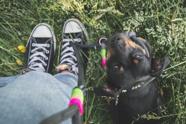 Pinscher Buddy, Buddy and Me, Hundeblog, Dogblog, Testbericht, Erfahrungen, Jules Leinenwelt, Tauwerk, Tauleine, Retrieverleine, Moxonleine, Hundeleine, Handmade, Takelung, farbig, bunt, Sommer 2016, Dogstyle, Summerlook