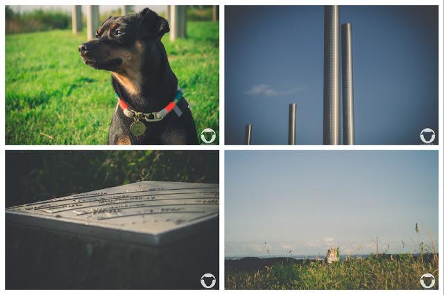 Pinscher Buddy, Buddy and Me, Hundeblog, Dogblog, Ruhrgebiet, Ruhrpott, Gassi, Spazieren, Halde Schwerin, Landmarke Schwerin, Landmarke Sonnenuhr, Ausflug, NRW