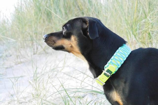 Pinscher Buddy, Buddy and Me, Hundeblog, Dogblog, Hundebox, Kennel, Reisen mit Hund, Urlaub, Auto, Anreise, Tipps, Sommerurlaub, Sicherheit, Futter, Wasser, Meer, Gepäck, Zingst