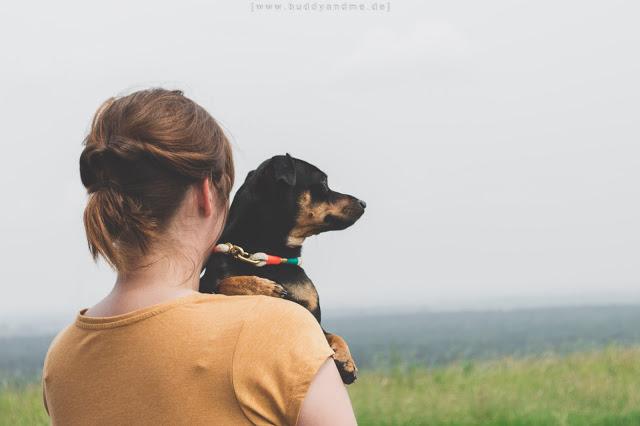 Pinscher Buddy, Buddy and Me, Dogblog, Hundeblog, Dog and Owner, Hund und Mensch, Liebe, Freundschaft, Portrait, Ruhrgebiet, Moers, Geleucht, Sommer, Momochita Tauwerk Halsband