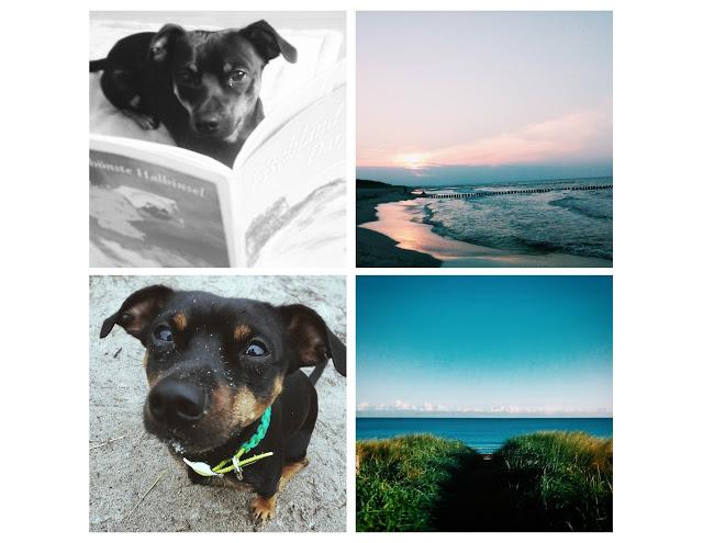 Pinscher Buddy, Buddy and Me, Hundeblog, Dogblog, Hundebox, Kennel, Reisen mit Hund, Urlaub, Auto, Anreise, Tipps, Sommerurlaub, Sicherheit, Futter, Wasser, Meer, Gepäck, Zingst 2015