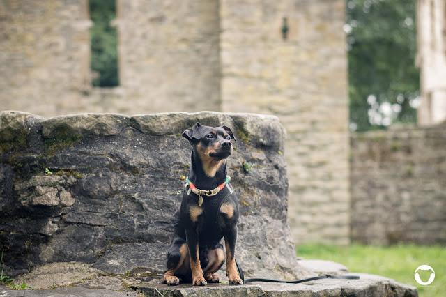 Pinscher Buddy, Buddy and Me, Hundeblog, Dogblog, Ausflug mit Hund, Spaziergang, Ruhrgebiet, NRW, Bergbau, Muttental, Witten, Burg Hardenstein, Ruine, Ruhr, Wandern mit Hund, Gassi