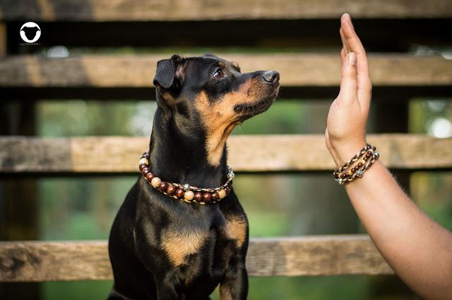 Pinscher Buddy, Buddy and Me, Hundeblog, Dogblog, Zwergpinscher, Miniature Pinscher, Kim and Frida, Freundschaftsbändchen, Kette, Accessoires für Hunde, Partnerlook, Hund und Frauchen, Holzperlen, Lederband