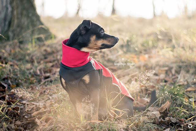 Pinscher Buddy, Buddy and Me, Hundeblog, Dogblog, Zwergpinscher, Leben mit Hund, Hundefotografie, Essen, Ruhrgebiet, Herbst, November, Novemberwetter, Winter mit Hund, Gassi
