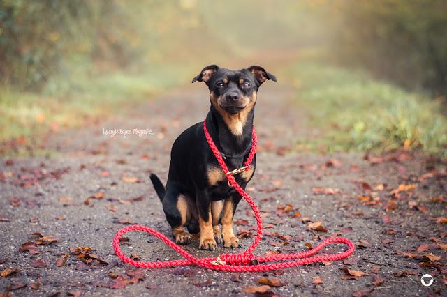 Pinscher Buddy, Buddy and Me, Hundeblog, Dogblog, Zwergpinscher, Leben mit Hund, Hundefotografie, Molly and Stitch
