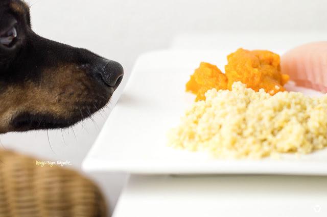 Pinscher Buddy, Buddy and Me, Hundeblog, Dogblog, Zwergpinscher, Leben mit Hund, Hundefotografie, Schonkost für Hunde, Möhren, Karotten, Morosche Möhrensuppe, Hirse, Reis, gegartes Hühnchen, Magen-Darm, leichte Kost