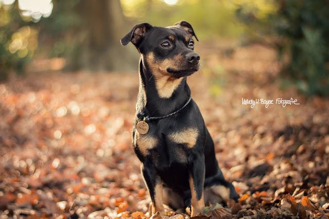 Pinscher Buddy, Buddy and Me, Hundeblog, Dogblog, Hundefotografie, Leben mit Hund, Hundehalter, Glück, Glücklichsein, Veränderungen, Hund, Lebensfreude, kleine Dinge, Selbstfindung, Erwachsensein, Herbst