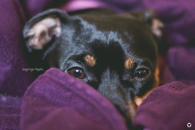 Pinscher Buddy, Buddy and Me, Hundeblog, Dogblog, Zwergpinscher, Leben mit Hund, Hundefotografie, Nikon D3200, Matteffekt, mattes Finish, Gradationskurve, Fotografie, selbstgemacht, Anleitung, Tutorial