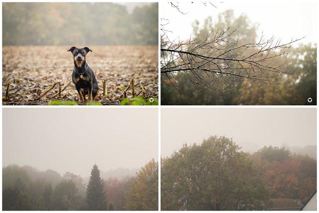 Pinscher Buddy, Buddy and Me, Hundeblog, Dogblog, Zwergpinscher, Leben mit Hund, Hundefotografie, Herbst, November, Novemberwetter, Novemberstimmung, Nebel, Natur, Fotografie
