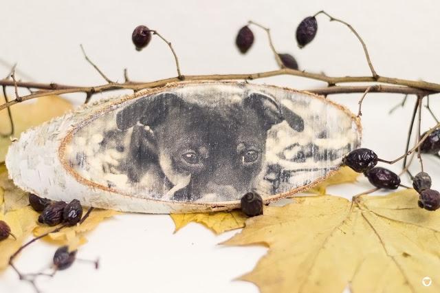 Pinscher Buddy, Buddy and Me, Hundeblog, Dogblog, Zwergpinscher, Leben mit Hund, Hundefotografie, DIY für Hunde, Dog it yourself, Fotografie, Foto auf Holz, Fotogeschenk, selbstgemacht, Fototransfer Potch, potchen, Adventszeit, Weihnachten, Geschenkidee