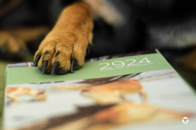 Pinscher Buddy, Buddy and Me, Hundeblog, Dogblog, Buch, Empfehlung, Rezension, 2924 Hunde und 10 Tierheime, Manuela Dörr, Hunde im Ausland, Straßenhunde, Rumänien, Spanien, Italien, Deutschland, Fotoroman