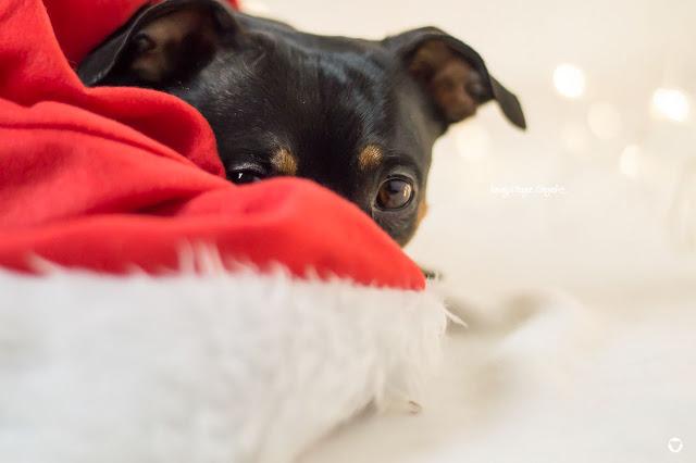 Pinscher Buddy, Buddy and Me, Hundeblog, Dogblog, Zwergpinscher, Leben mit Hund, Hundefotografie, Essen, Ruhrgebiet, Winter, Dezember, Weihnachten mit Hund, Silvester mit Hund, entspannt, Fotografie, Nikon, Bokeh