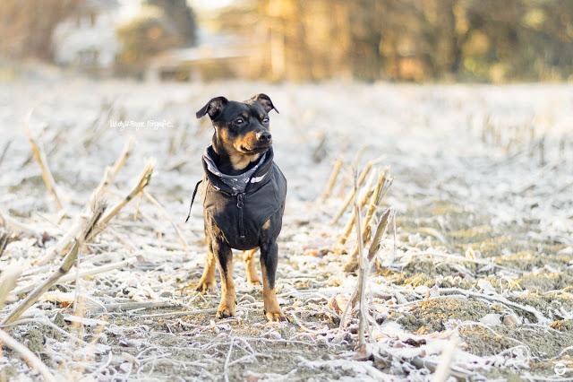 Pinscher Buddy, Buddy and Me, Hundeblog, Dogblog, Zwergpinscher, Leben mit Hund, Hundefotografie, Essen, Ruhrgebiet, Winter, November, Novemberwetter, Winter mit Hund, Gassi, Outdoor