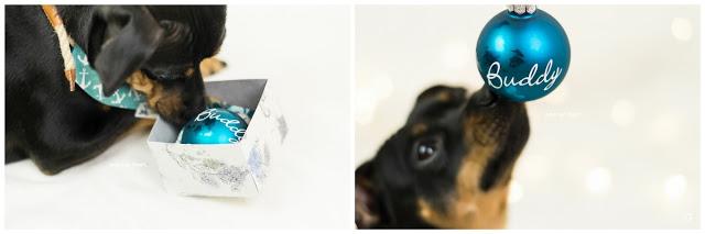 Pinscher Buddy, Buddy and Me, Hundeblog, Dogblog, Zwergpinscher, Leben mit Hund, Hundefotografie, Produkttest, Erfahrungen, Zucker und Zimt Design, handgemacht, individuell, Hundehalstuch mit Name, Weihnachten, Adventszeit