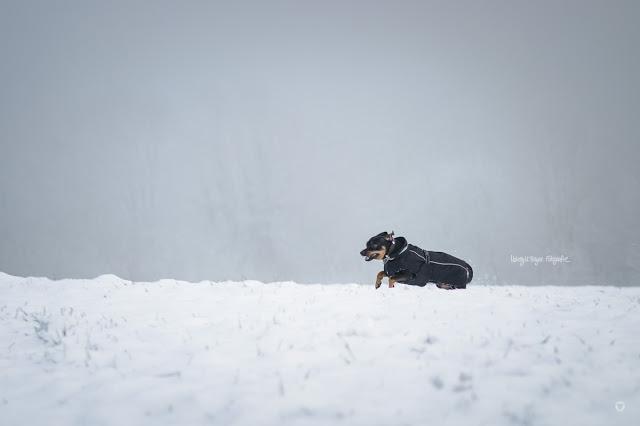 Pinscher Buddy, Buddy and Me, Hundeblog, Dogblog, Zwergpinscher, Leben mit Hund, Hundefotografie, Essen, Ruhrgebiet, Winter, Dezember, Winter mit Hund, Gassi, Outdoor