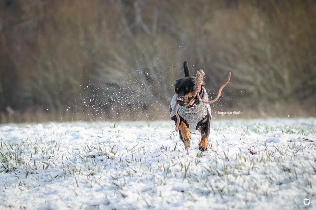 Pinscher Buddy, Buddy and Me, Hundeblog, Dogblog, Zwergpinscher, Leben mit Hund, Hundefotografie, Essen, Ruhrgebiet, Winter, Januar, Winter mit Hund, Gassi, Outdoor, Schnee, Bewegung, Fotografie, Nikon
