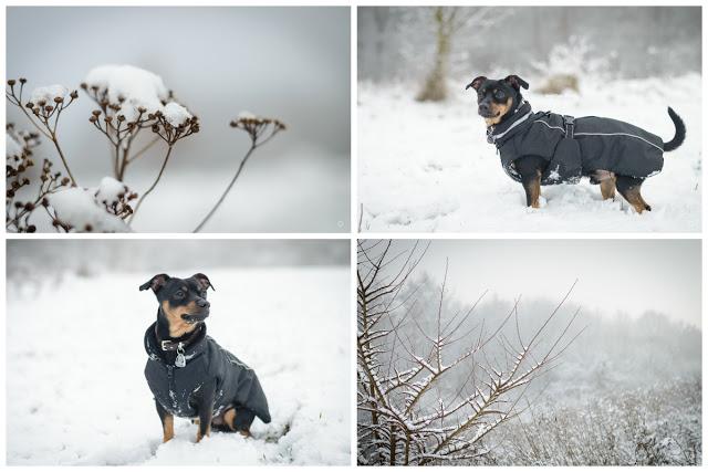 Pinscher Buddy, Buddy and Me, Hundeblog, Dogblog, Zwergpinscher, Leben mit Hund, Hundefotografie, Essen, Ruhrgebiet, Winter, Januar, Winter mit Hund, Gassi, Outdoor