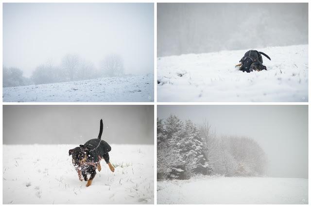 Pinscher Buddy, Buddy and Me, Hundeblog, Dogblog, Zwergpinscher, Leben mit Hund, Hundefotografie, Essen, Ruhrgebiet, Winter, Januar, Winter mit Hund, Gassi, Outdoo