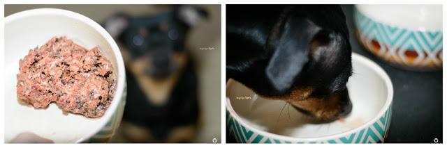Pinscher Buddy, Buddy and Me, Hundeblog, Dogblog, Zwergpinscher, Leben mit Hund, Hundefotografie, Essen, Ruhrgebiet, Barf, Ernährung, Frostfutter, Test, Erfahrungen, Bello&Friends, Bafco, Rohfütterung, Lieferant, Shop, Barfshop, Komplettmenüs, Huhn, Rind