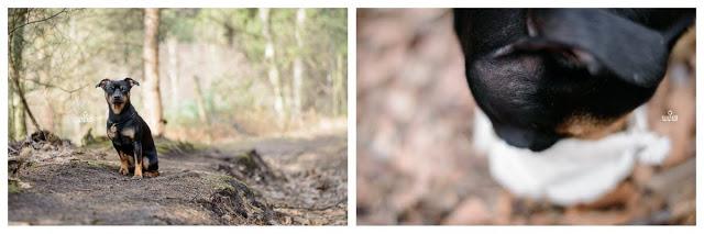 Pinscher Buddy, Buddy and Me, Hundeblog, Dogblog, Zwergpinscher, Leben mit Hund, Hundefotografie, Essen, Ruhrgebiet, März, Frühling mit Hund, Gassi, Outdoor, Haard, Haltern, Flaesheim, Dachsberg, Wandern mit Hund, Spaziergang, Wald, Forst