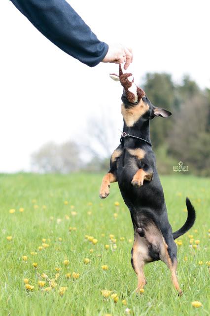 Pinscher Buddy, Buddy and Me, Hundeblog, Dogblog, Zwergpinscher, Leben mit Hund, Hundefotografie, Essen, Ruhrgebiet, März, Frühling mit Hund, Gassi, Outdoor  #heimatgrün, #europeangreencapital, #meingrünesessen, #erlebedeingrüneswunder, Grüne Hauptstadt Essen, 2017