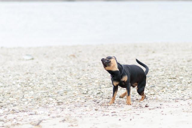 Pinscher Buddy, Buddy and Me, Hundeblog, Dogblog, Zwergpinscher, Leben mit Hund, Hundefotografie, Essen, Ruhrgebiet, März, Frühling mit Hund, Gassi, Outdoor, Rhein, Duisburg, Spielen, Apportieren