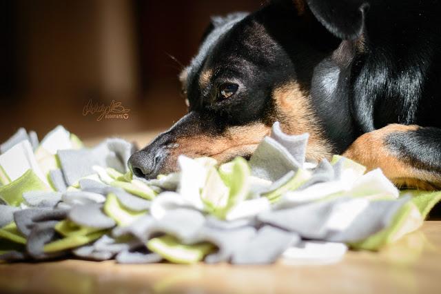 Pinscher Buddy, Buddy and Me, Hundeblog, Dogblog, Zwergpinscher, Leben mit Hund, Hundefotografie, Essen, Ruhrgebiet, April, Frühling mit Hund, Gassi, Outdoor, Beschäftigung, Indoor, Hund, Schnüffelteppich, Schnüffelspiele, Nasenarbeit, Auslastung