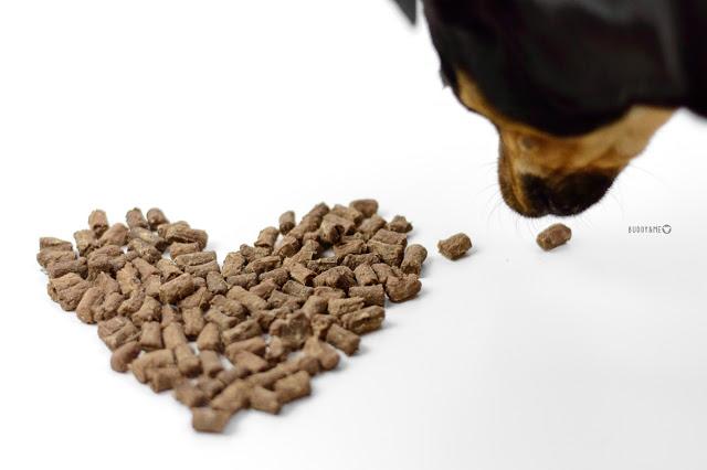 Pinscher Buddy, Buddy and Me, Hundeblog, Dogblog, Zwergpinscher, Leben mit Hund, Hundefotografie, Essen, Ruhrgebiet, Barf, Rohfütterung, Obst, Gemüse, Fleisch, Frostfleisch, Zusammenstellung, Rezepte, gesund, ausgewogen, abwechslungsreich, Nutricanis, Trockenfleischsnack für Hunde, Testbericht, Produkttest, Erfahrungen, Känguru, Büffel, Truthahn, Ente, Wild, Apfel, Karotten, Single Protein, Tipp