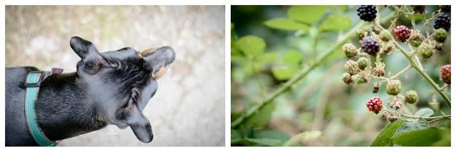 Pinscher Buddy, Buddy and Me, Hundeblog, Dogblog, Zwergpinscher, Leben mit Hund, Hundefotografie, Essen, Ruhrgebiet,Gassi, Outdoor  #heimatgrün, #europeangreencapital, #meingrünesessen, #erlebedeingrüneswunder, Grüne Hauptstadt Essen, 2017, Wald, Stadtwald, Suchtrupp Accessoires, Halsband, Schlupfhalsband, Petfindu Hundemarke, Sommer, grün