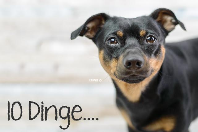 Pinscher Buddy, Buddy and Me, Hundeblog, Dogblog, Zwergpinscher, Leben mit Hund, Hundefotografie, Essen, Ruhrgebiet
