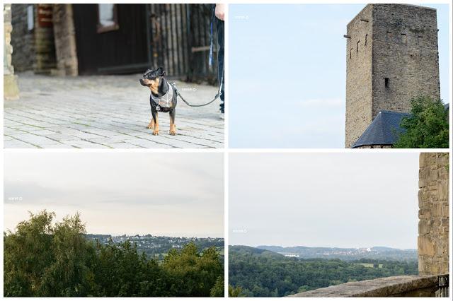 Pinscher Buddy, Buddy and Me, Hundeblog, Dogblog, Zwergpinscher, Leben mit Hund, Hundefotografie, Essen, Ruhrgebiet,Gassi, Outdoor, Hattingen, Burg Blankenstein, Ausflug mit Hund