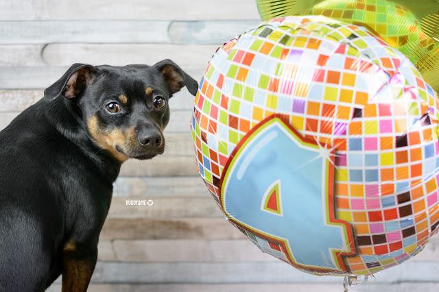 Pinscher Buddy, Buddy and Me, Hundeblog, Dogblog, Zwergpinscher, Leben mit Hund, Hundefotografie, Essen, Ruhrgebiet,Gassi, Outdoor, Geburtstag, Happy Birthday Dog, Hundegeburtstag