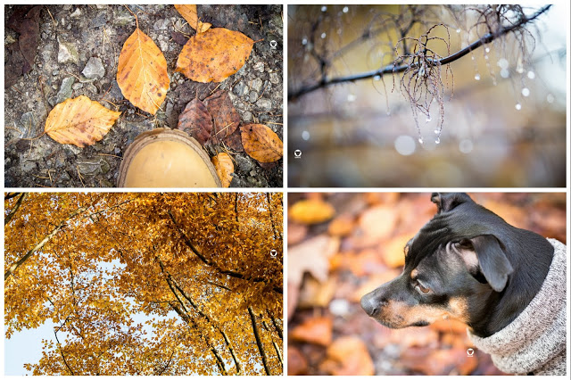 Pinscher Buddy, Buddy and Me, Hundeblog, Dogblog, Zwergpinscher, Leben mit Hund, Hundefotografie, Essen, Ruhrgebiet,Gassi, Outdoor, Herbst, November, Herbstlaub, buntes Laub, Kruppwald, Heimat