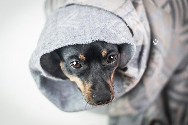 Pinscher Buddy, Buddy and Me, Hundeblog, Dogblog, Zwergpinscher, Leben mit Hund, Hundefotografie, Essen, Ruhrgebiet,Gassi, Outdoor, Gesundheit, Tierarzt, Bandscheibenproblematik, Krankheit, Röntgen, Untersuchung, Rückenschmerzen, Erfahrungen