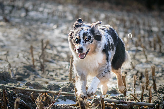 Pinscher Buddy, Buddy and Me, Hundeblog, Dogblog, Zwergpinscher, Leben mit Hund, Hundefotografie, Essen, Ruhrgebiet,Gassi, Outdoor, Playdate, Hundetreffen, Hundefreundschaft, Hundebegegnung, Charakter, Erfahrungen, Aussieblog, Indianermädchen, Emmely